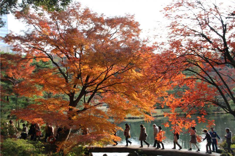 北之丸公園楓葉